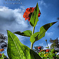Nature Does Not Hurry Zinnia Standing Tall by Thomas Woolworth