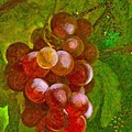 Nature Goodness Grapes On The Vine by Angela Stanton