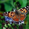 Nature Is Beautiful by Elaine Malott