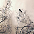 Nature Raven Crow Trees - Surreal Fantasy Gothic Nature Raven Crow In Trees Sepia Print Decor by Kathy Fornal