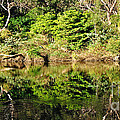 Nature Mirrored by Kaye Menner