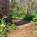 Nature Path by Art Dingo