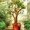 Nature - Plant - Tree Of Life  by Mike Savad