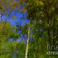 Nature Reflecting by Melissa Petrey