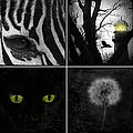 Nature Squares - Collage by Gothicrow Images