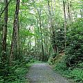 Nature Trail by Mary Koval