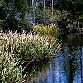 Nature Walk 2 by Jon Cody