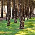 Nature Walk by Herman Cloete
