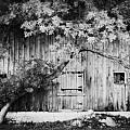 Natures Awning Bw by Julie Hamilton