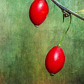 Nature's Baubles by Dale Kincaid
