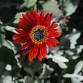 Nature's Gold Flower by Carol  Eliassen