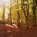 Nature's Light by Matthew Gibson