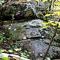 Nature's Mossy Boulders by Maria Urso