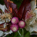 Nature's Ornament by Susan Herber