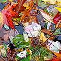 Nature's Paintbrush by Ira Shander
