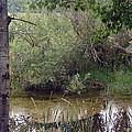 Nature's Pond by Lovina Wright