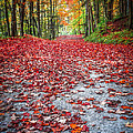 Nature's Red Carpet by Edward Fielding