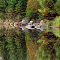Natures Reflection by Mark Papke