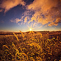 Nature's Romm With A View by Phil Koch