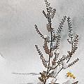 Natures Snow Coat by Daren Johnson