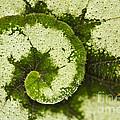 Natures Spiral by Heiko Koehrer-Wagner