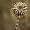 Natures Starburst by Scott Moss