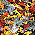 Nature's Tapestry by Ira Shander