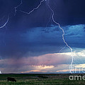 Nature's Thunder by Cindy Singleton