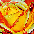 Nature's Vivid Colors by Kaye Menner