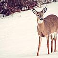 Natures Winter Visit by Karol Livote