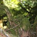 Natures Wooden Duck by Richard Katz