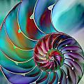 Nautilus by Klara Acel