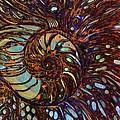 Nautilus  by Mary Eichert