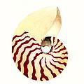 Nautilus by Michael Vigliotti