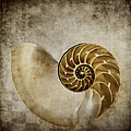 Nautilus Shell by Carol Leigh