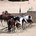 Navajo Herd by Susan Woodward