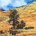 Navajo Sandstone by Robert Bales