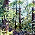 Navarro River Redwoods by Bill Hudson
