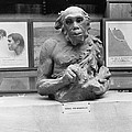 Neanderthal Museum Display, 1924 by Science Photo Library