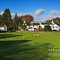 Near Sawrey In The Lake District by Louise Heusinkveld