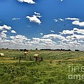 Nebraska Hay Baling by PainterArtist FIN