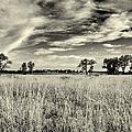 Nebraska Prairie One In Black And White by Joshua House