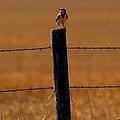 Nebraska's Bird by Elizabeth Winter