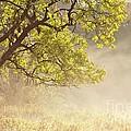 Nebulous Tree by Heiko Koehrer-Wagner