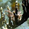 Neck Crab - Macro Undersea Reef Life by Amy McDaniel