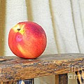 Nectarine by Mary Deal