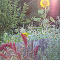 Neighboring Gardeners by Michael P Johnson Jr