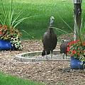 Neighbors Flower Garden by Bj Hodges