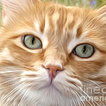 Yellow Cat Digital Art by Dianne Phelps