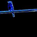 Neon Bluebird by Katy Hawk